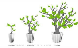 【家有妙招】:Growing Basin花盆 容忍植物肆意生长,因为它们要在一起长大