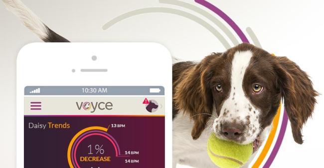 智能项圈Voyce能告诉主人狗狗的感受