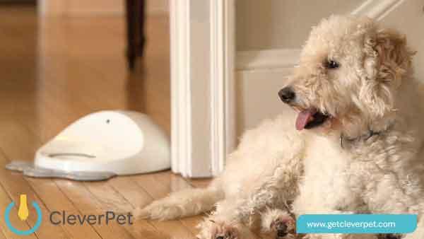 微智能宠物狗训练器CleverPet能与爱狗互动