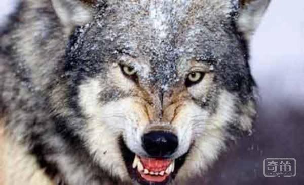 狼性领导十大原则,经商必读!