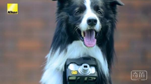 Heartography相机支架让狗狗拍摄到自己感兴趣东东