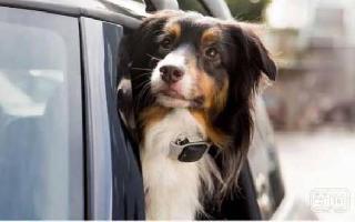 防微杜渐是个学问,说说能帮助你高效率找到走失宠物的智能东东