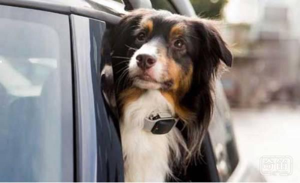 说说能帮助你高效率找到走失宠物的智能东东