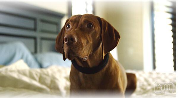 Connected Collar智能项圈让狗狗成为安全,健康的小伙伴