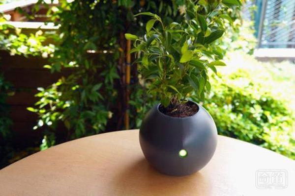 Biom智能花盆让我们动动手机就可以随心所欲的照顾家中的植物