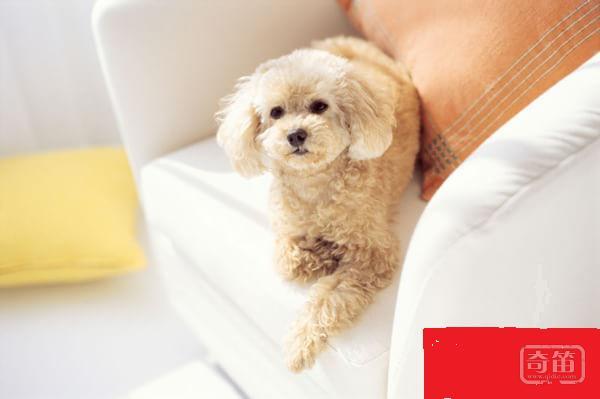 智能家居的发张,将对宠物看护行业产生影响